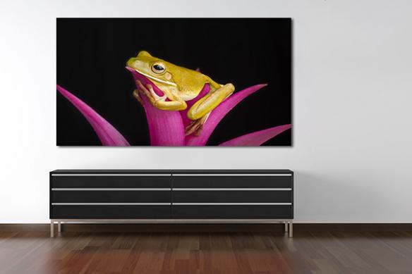 Tableau toile Grenouille sur fleur rose