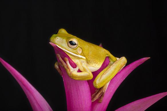 tableau toile moderne grenouille sur fleur