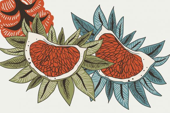 tableau imprimé fleur edelweiss