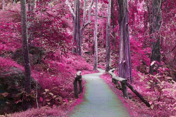 papier peint foret rose