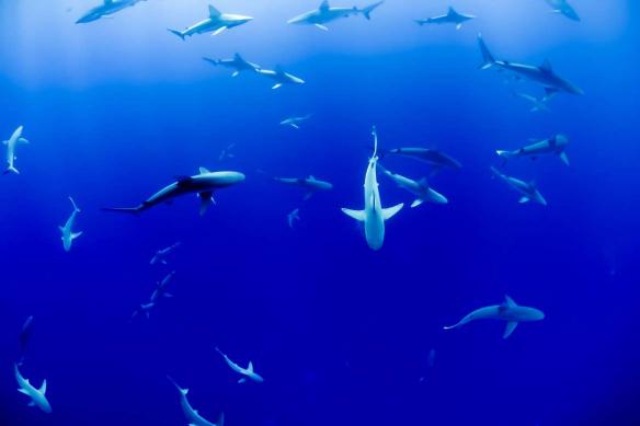 décoration salon original bleu dans des requins