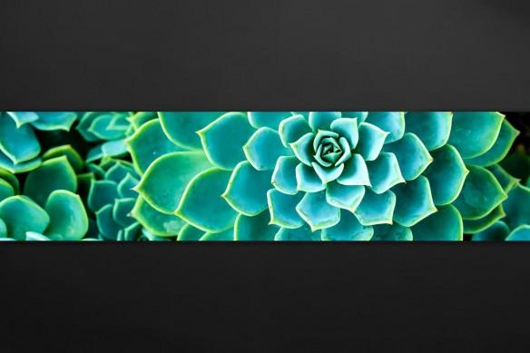 crédence cuisine adhésive cactus vert eau