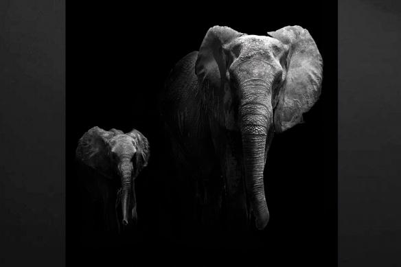 toile déco carré éléphant