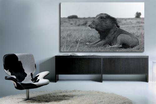 Tableau Lion face au vent