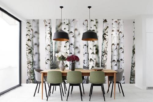 Papier peint forêt Troncs de Bouleaux blancs