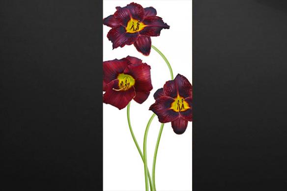 sticker porte fleurs lys rouge
