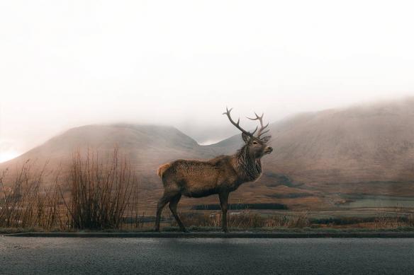 tableau-animal-cerf-nordique