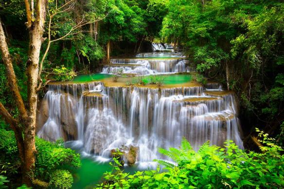 déco tropicale tendance cascade jungle