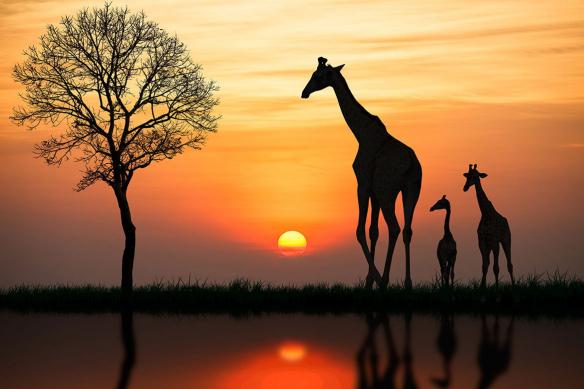 toile-decorative-murale-africaine-serengeti