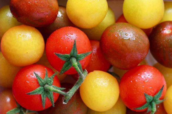 tapisserie-cuisine-tomates-jaunes
