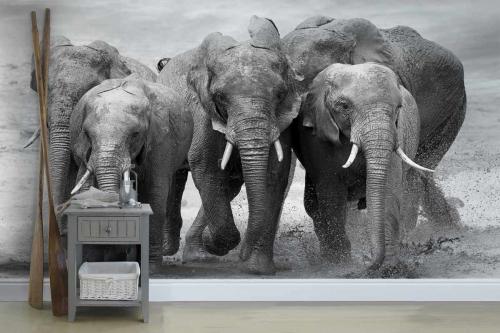 Papier peint panoramique noir et blanc Troupe d'éléphants