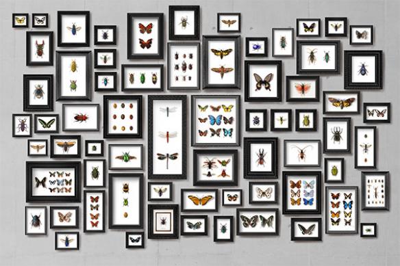 Papier peint trompe l oeil papillons