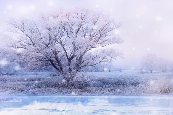 papier peint arbre gele en hiver