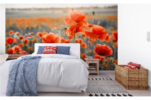 Papier peint fleurs champ de pavot chambre