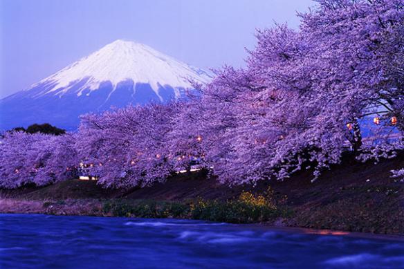 papier-peint-montagne-et-cerisiers