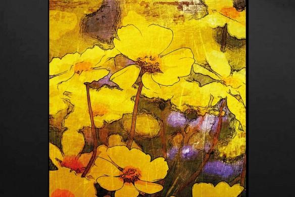cadre-fleur-paquerettes-jaunes