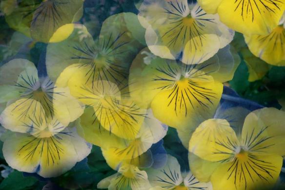 toile-fleurs-jaunes-pour-salon