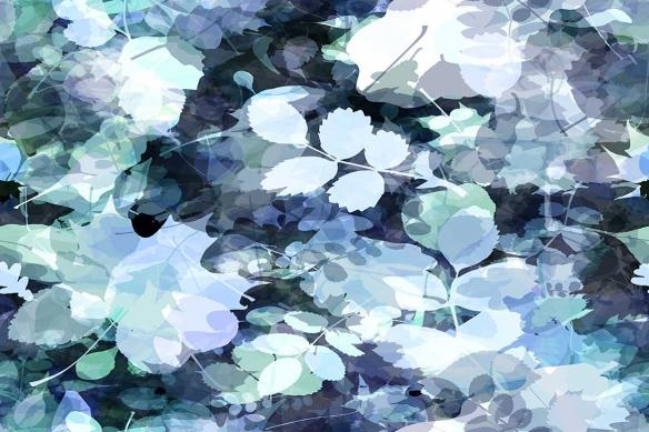 cadre-fleur-herbier-fraicheur