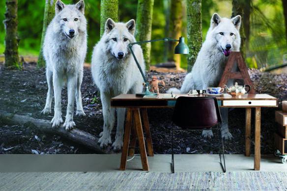Papier peint grande largeur Loup blanc en meute