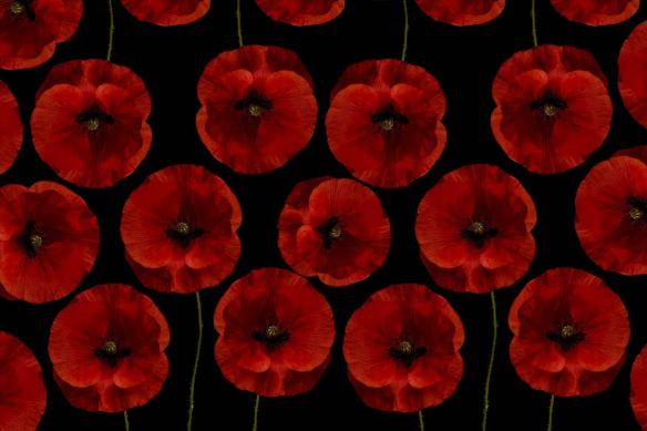 papier-peint-à-fleurs-géantes-coquelicots-rouges-et-noirs