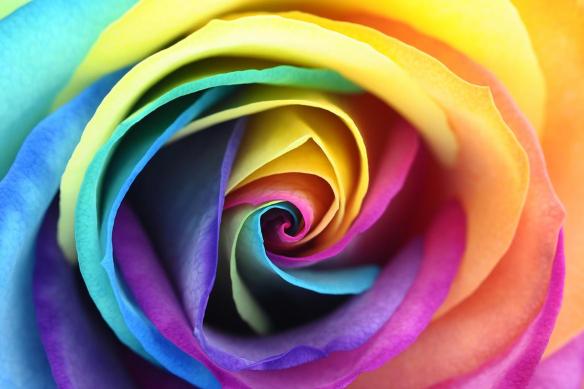 Papier-peint-grosse-fleur-rose-multicolore