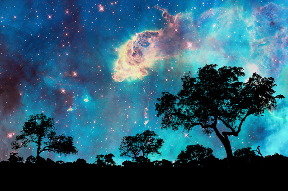 Papier peint foret sous les étoiles