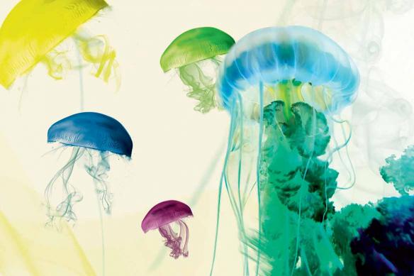 papier-peint-tendance-meduse