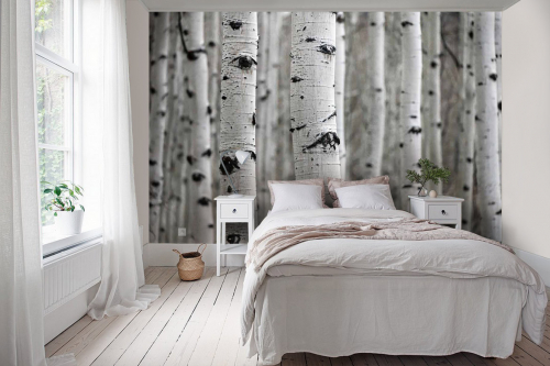 papier-peint-panoramique-foret-de-bouleaux-blancs