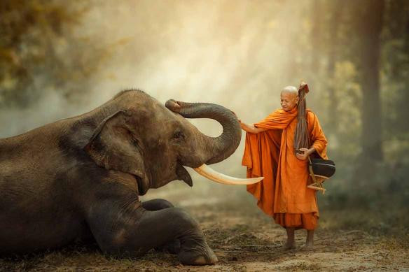 tableau-elephant-et-bonze