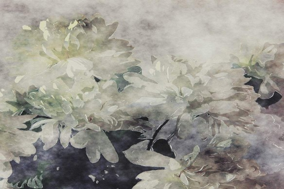 papier-peint-fleuri-romance