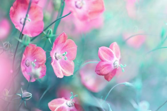 tapisserie-fleurie-moderne-bleuets