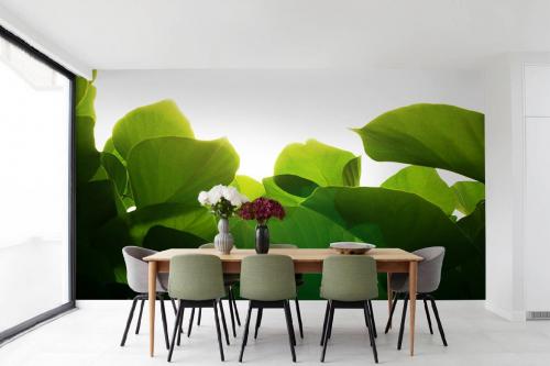 Papier peint jungle feuilles de butéa
