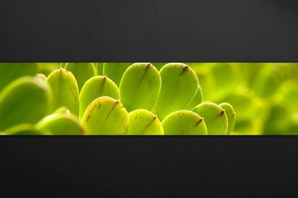 deco-cuisine-tropicale-plantes-botanique