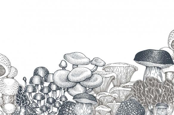 tapisserie-salle-à-manger-champignons