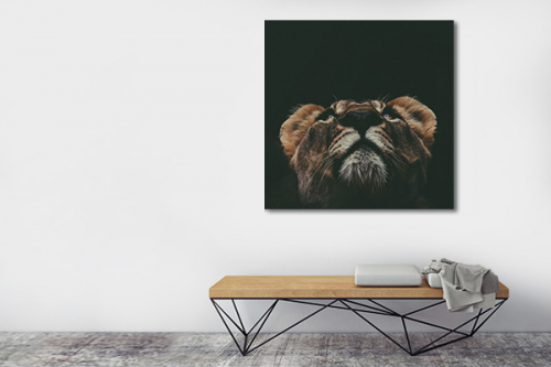 Tableau lion à l'affut