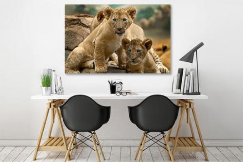 Tableau pour enfant Deux lionceaux