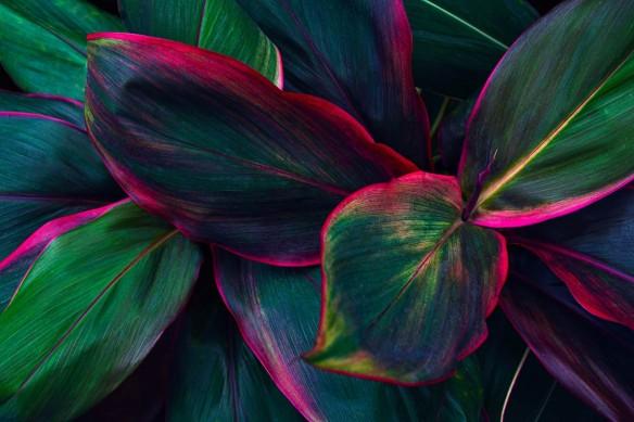 papier-peint-tropical-feuillage-vert-et-rouge