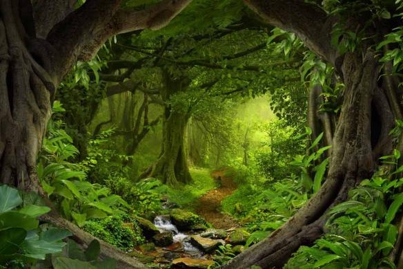 papier peint jungle entre les troncs arbres