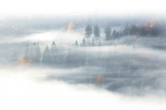 cadre mural paysage foret brumeuse