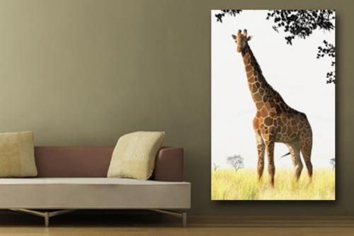 Tableau Girafe salon savane