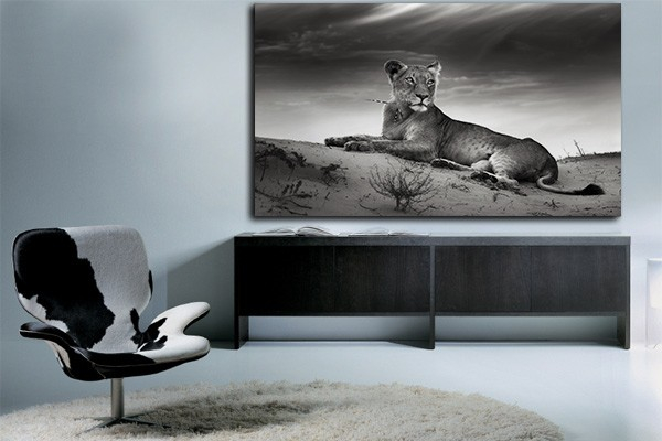 tableau noir et blanc lionne izoa. Black Bedroom Furniture Sets. Home Design Ideas