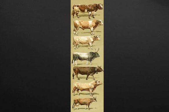 Papier peint lé unique vaches du monde