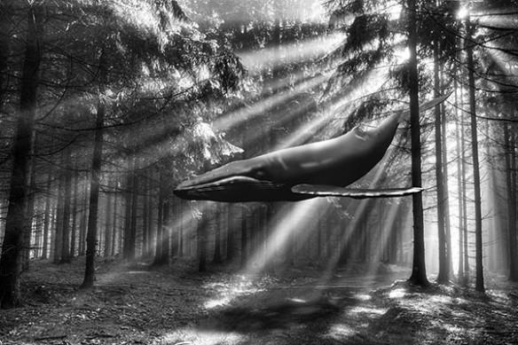 baleine bleu volante forêt