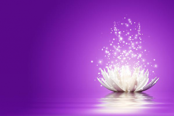 Toile grand format fleur lotus violet