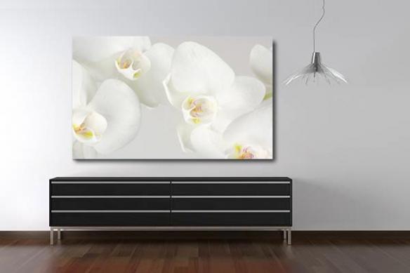 Tableau design orchidées phalaenopsis