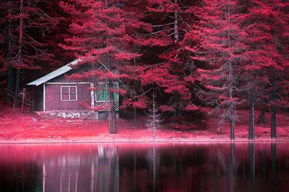 Cabane de Bûcheron près du lac