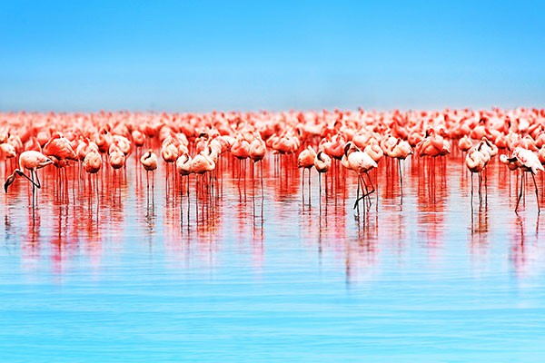Papier peint photo flamants roses izoa - Papier peint flamant rose ...