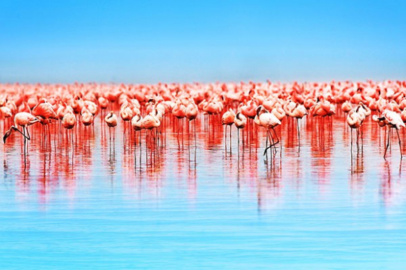 Papier Peint Photo Flamants Roses