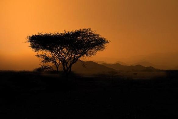 plaine Masai Mara