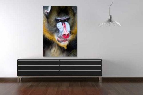Tableau déco Mandrill